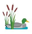 Drake duck vector image