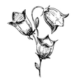 Bell flower sketch vector image