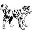 Decorative standing portrait of dog border collie vector image