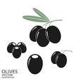 Black olives Set vector image vector image
