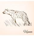 Doodle hyena vector image