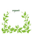 template organic green 2 vector image