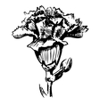 Garden carnation sketch vector image
