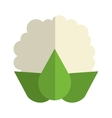 whole cauliflower icon vector image