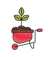 cultivated plant in wheelbarrow vector image