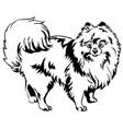 Decorative standing portrait of dog pomeranian vector image