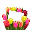 Red and yellow tulips vector image vector image
