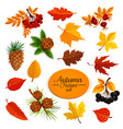 autumn icons of leaf fall or forest berry vector image