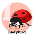 abc cartoon ladybird vector image