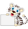 cute baby white tiger posing with blank sign vector image vector image