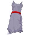 15pitbull back001 vector image vector image