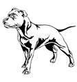decorative standing portrait of dog staffordshire vector image