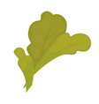 green leaf isolated on white close up vector image