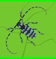 beetle bug vector image