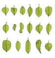 Leaves Set vector image