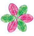 beauty flower watercolor paint vector image