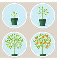 growth concept vector image