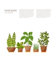 Set of potted plant isolated vector image