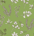 Seamless Pattern Herb Leaves vector image