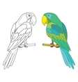 parrot on a perch vector image