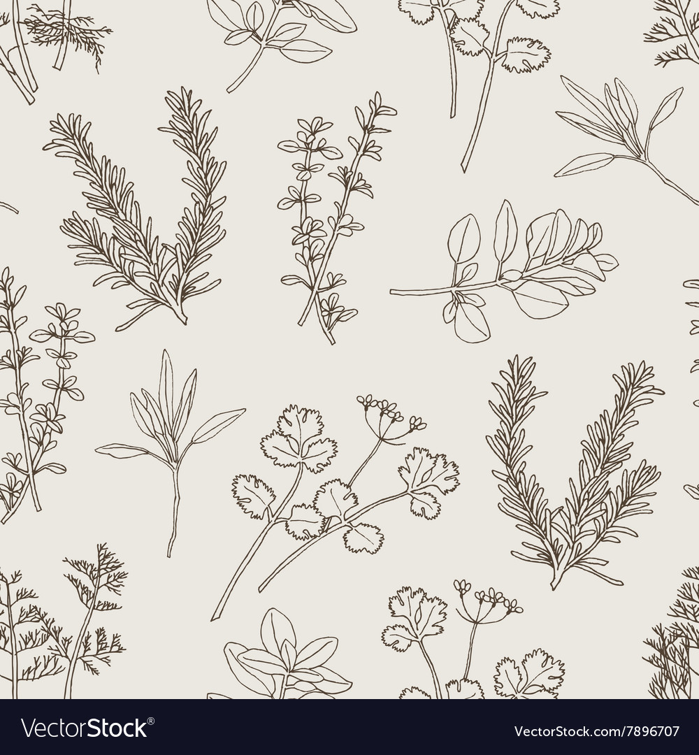 Seamless pattern herb leaves vector