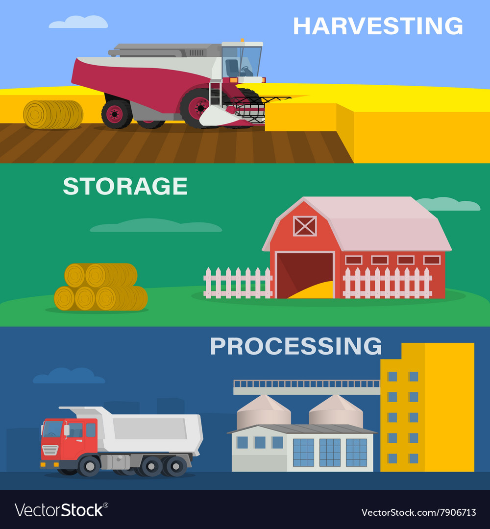 Process harvesting crops on the field vector