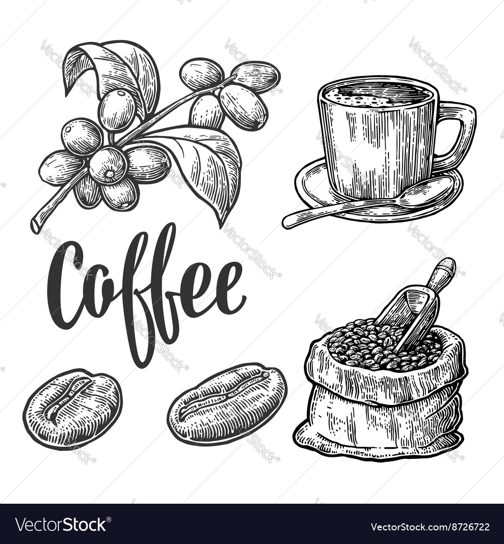 Sack with coffee beans with wooden scoop and beans vector