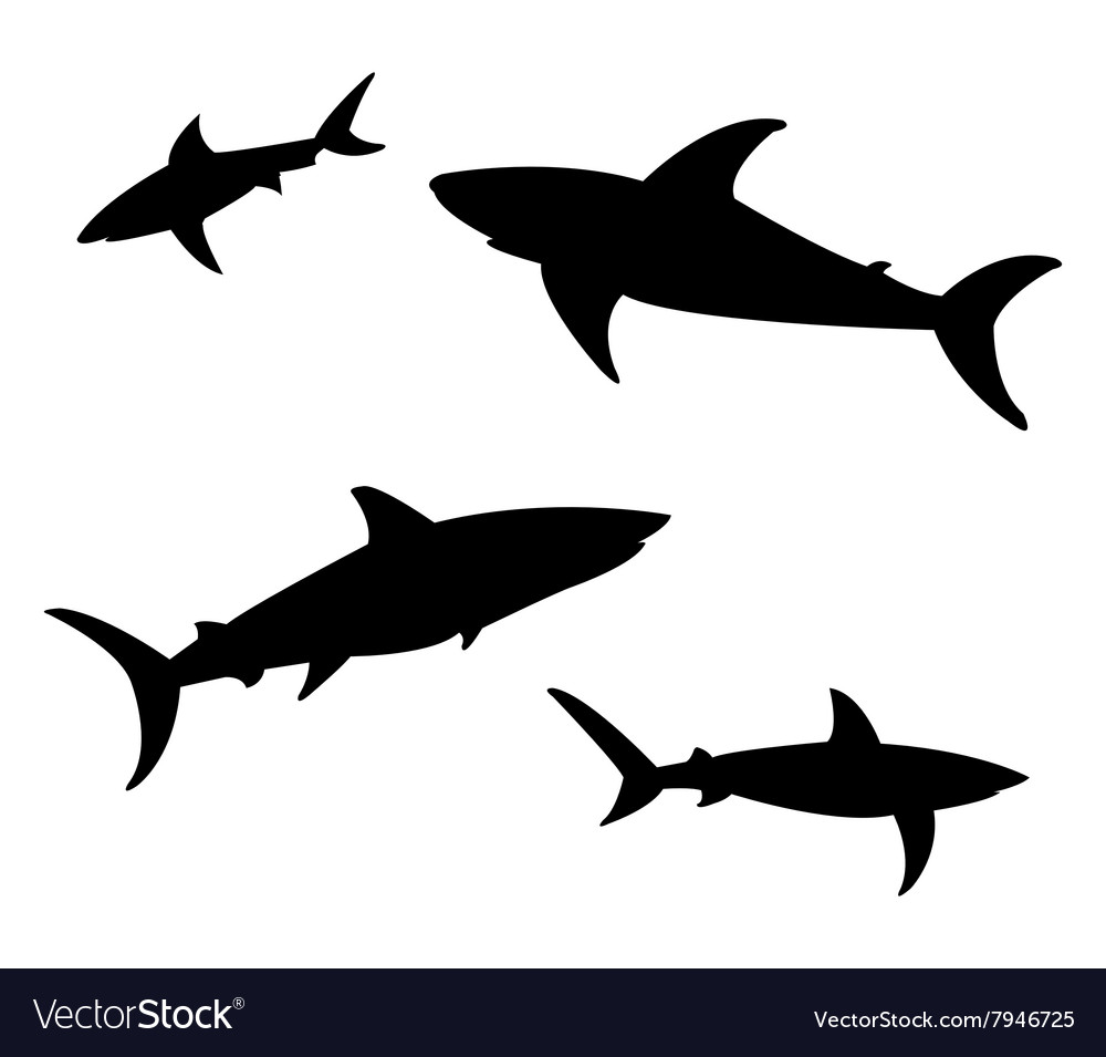 Shark on white background vector