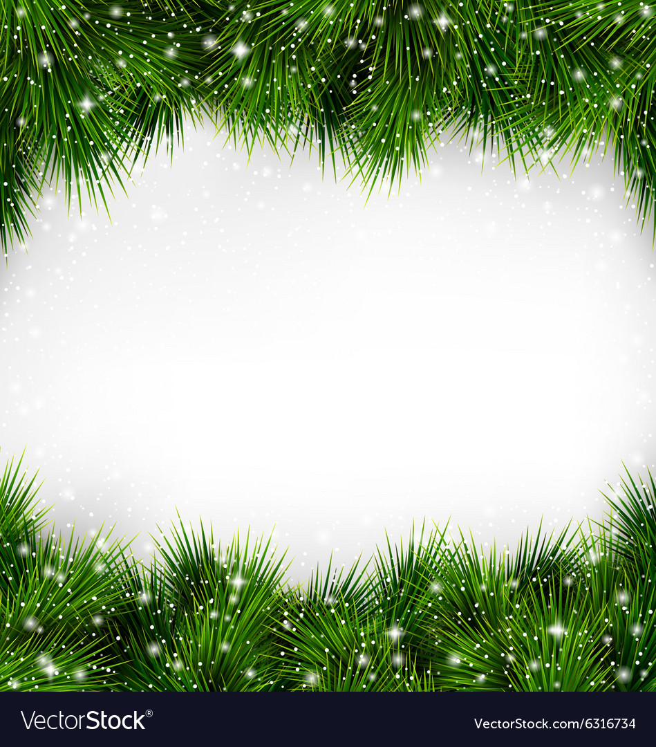 Shiny green christmas tree pine branches like vector