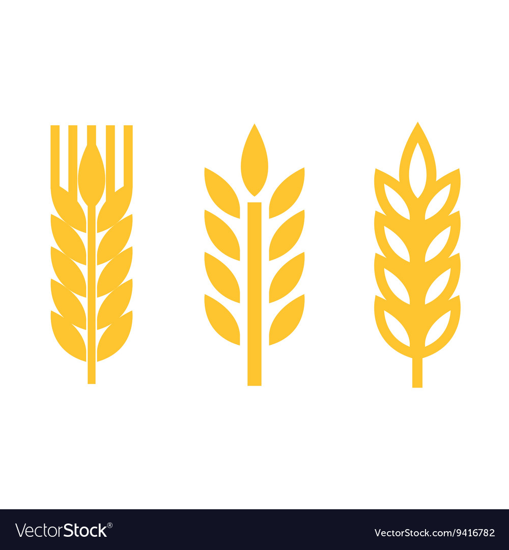 Yellow wheat ear spica icons set vector