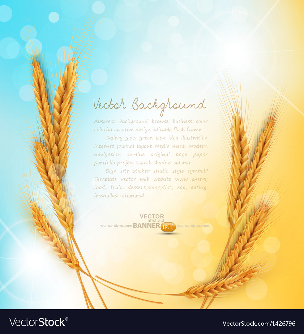 Background with ears of wheat vector