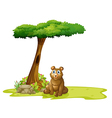A tree with a hollow at the back of a bear vector image vector image