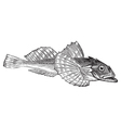 Bullhead fish engraving vector image