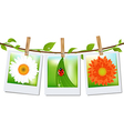 Photo Frames With Nature Image vector image
