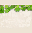 maple tree branch green on old wall background vector image