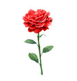 image of red rose on stem isolated on white vector image