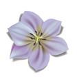 beautiful blossom flower summer flower vector image