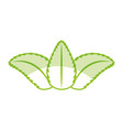 tea leafs product icon vector image
