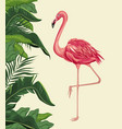 flamingo exotic tropical bird with leaf plam vector image