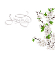 Cherry spring branch vector image