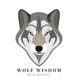 Cute grey wolf vector image