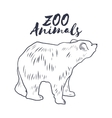 Hand drawn sketch bear Wild animals vector image