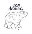 Hand drawn sketch bear Wild animals vector image