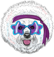 hipster Star Disco dog Bichon breed vector image