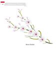 Moon Orchids The National Flower of Indonesia vector image