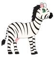 Animal zebra on white background vector image