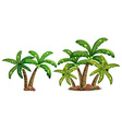 Coconut trees vector image