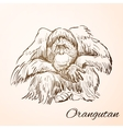 doodle orangutan vector image