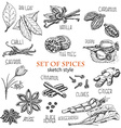 set of spices in sketch style vector image