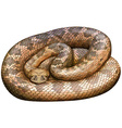 Rattlesnake vector image vector image